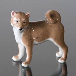 Dog, Shibi Inu, Royal Copenhagen dog figurine | No. 1249665 | DPH Trading
