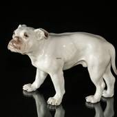 Large White Bulldog looking up, Bing & Grondahl dog figurine