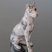 Great Dane, Sitting at attention, Bing & Grondahl dog figurine No. 2038