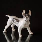 Bulldog standing at attention, Royal Copenhagen figurine
