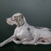 Royal Copenhagen Pointer with head up 13X24CM