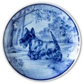 Ravn dog plate no. 61, Scottish Terrier