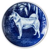Ravn dog plate no. 101, Greenland dog