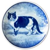 Ravn cat plate no. 4, European short haired cat